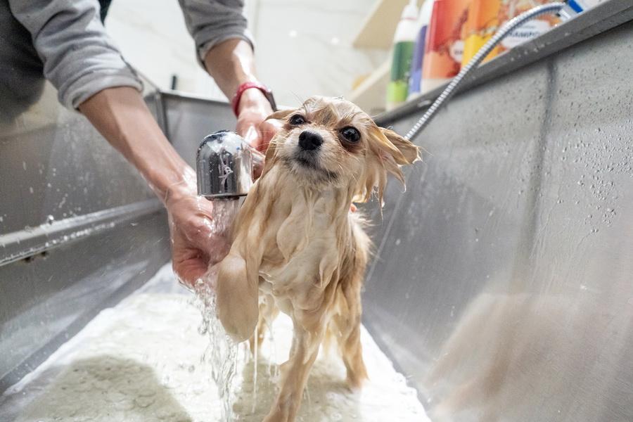 Šampon pro psy