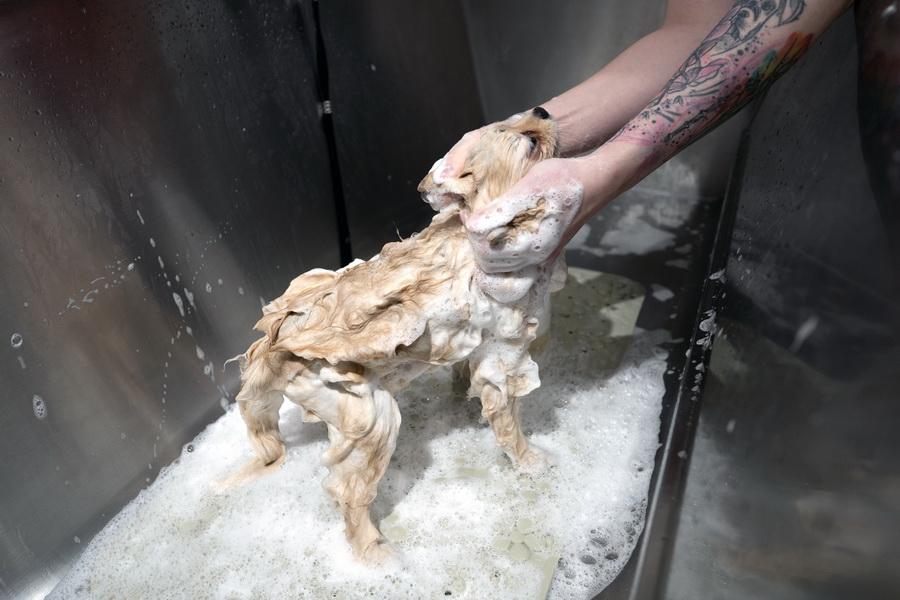 Kdy koupat štěně