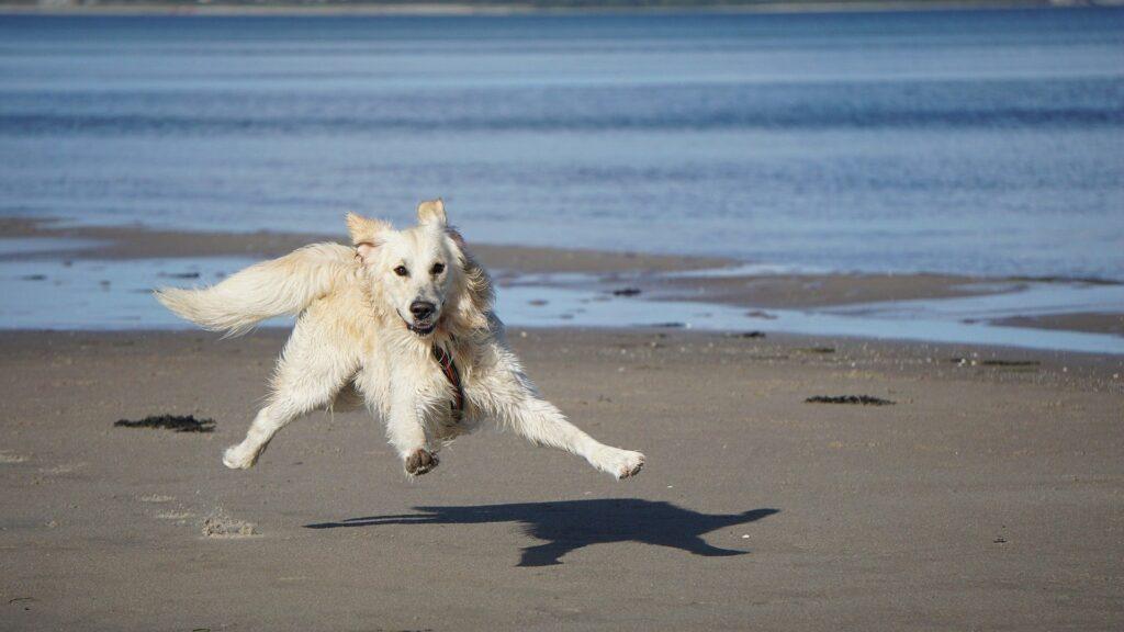 pes a moře